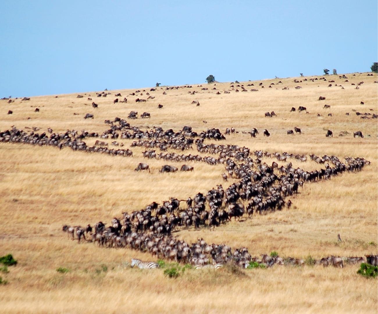 la gran migracion