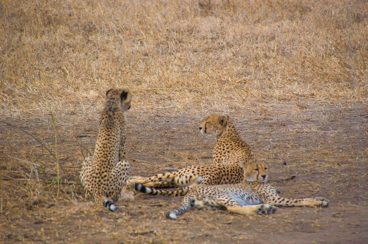 Viaje de Safari